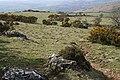 High Sheep Pasture west of Dartmoor - geograph.org.uk - 157568.jpg