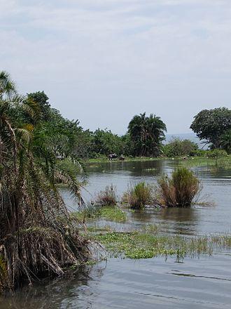 Rubondo Island National Park - Image: Hippos on Rubondo Island