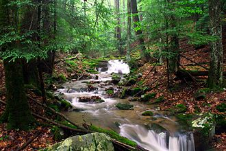 Holly River State Park - Image: Holly river run 3 Forest Wander