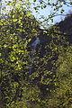 Hopfgartwasserfall 54690 2014-04-30.JPG