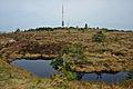 Hornisgrinde-Moor.jpg