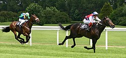 Thoroughbred race horses