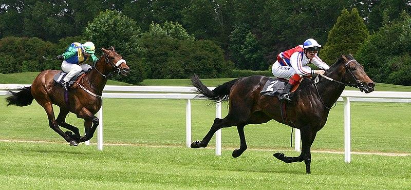 File:Horse-racing-5.jpg