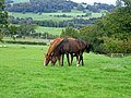 Horses in field above Highwood Farm - geograph.org.uk - 255840.jpg