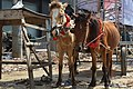 Horses with Carriage at Agrabad (05).jpg