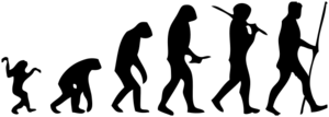 Human-evolution-man.png