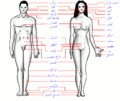 Human body features ar.png