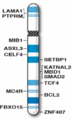 Human chromosome 18 with ASD genes from IJMS-16-06464.png