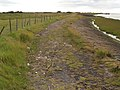 Humber Bank Footpath - geograph.org.uk - 540750.jpg