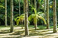 Ilha de São Miguel DSC00930 (36586410990).jpg