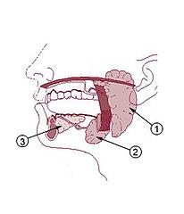 geruch unter zahnkrone