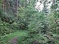 Im Steintal oberhalb von Lautenbach, Gernsbach (3).jpg