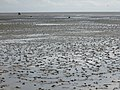 Impressions from the Nationalpark Schleswig-Holsteinisches Wattenmeer take 5.jpg