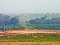 India-6194 - Flickr - archer10 (Dennis).jpg