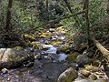 Indian-camp-creek-gsmnp1.jpg