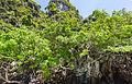 Isla Phi Phi Lay, Tailandia, 2013-08-19, DD 17.JPG