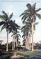 Isle of Pines - Palm avenue.jpg