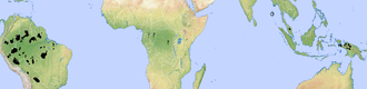 Uncontacted peoples - A map of uncontacted tribes, around the start of the 21st century