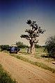 JIRCAS Baobab Niamey crop.jpg