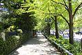 JP-Kanagawa-Nihon-Ōdouri.jpg