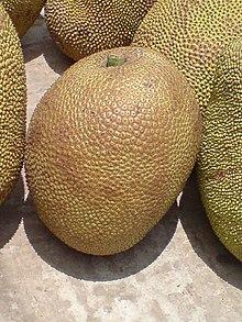 Jack Fruit.JPG