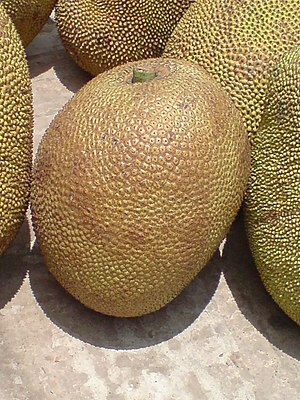 Jackfruit, the national fruit of Bangladesh.