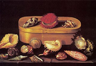 Still life with shells and a wooden box