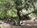 Jardín canario 26.JPG