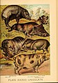 Johnson's household book of nature (Plate XXXVII) (7268666696).jpg