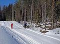 Jyväskylä - ski track.jpg