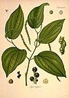 Köhler's Medizinal-Pflanzen in naturgetreuen Abbildungen mit kurz erläuterndem Texte (Plate 144) (8231737637).jpg