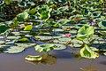 Kakadu (AU), Kakadu National Park, Yellow Water -- 2019 -- 3955.jpg