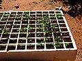 Kalahari vegatables.jpg