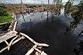Kalimantan deforestation and degradation 7 (10706174785).jpg