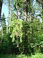 Kamienna Góra, Dolnośląskie Centrum Rehabilitacji, park (Aw58) DSC05313.JPG
