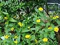 Kammal flowers.jpg