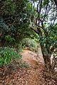 Kasturba Rd, Matheran, Maharashtra 410102, India - panoramio (75).jpg
