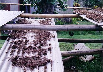 Kava - Kava root drying in Lovoni village, Ovalau, Fiji