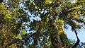 Kawasan hutan Gunung Slamet.jpg