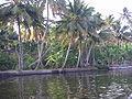 Keralaback (20).jpg