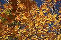 Kickapoo State Park leafs.jpg