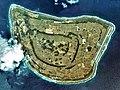 Kitadaitojima Island Aerial photograph.2009.jpg