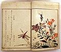 Kitagawa utamaro, libro di insetti selezionati, 1788 ca. 02.jpg