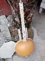 Kora, instrument de musique en pays Mandingue( (appelé Griots) et utilisé aussi par les chasseurs traditionnel appelés Dozo( de dos).jpg