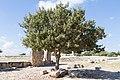 Kouklia, Cyprus - panoramio (59).jpg