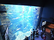 Kyoto Aquarium in 2013-5-2 No,10.JPG