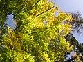 L'automne - panoramio (2).jpg