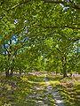 Lüneburger Heide 081.jpg