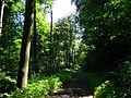 LSG 378517, Stadt Kassel, Enkeberg, 3, Wolfsanger-Hasenhecke, Kassel.jpg