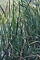 Lago Fimon tifa.jpg